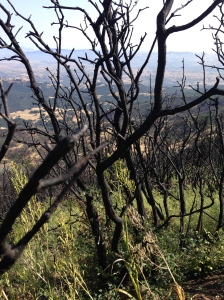 A fire last year left part of the mountain looking like this: beauty after the pain.